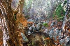 hösten räknade fallna skogjordningsligganden låter vara yellow Royaltyfria Foton