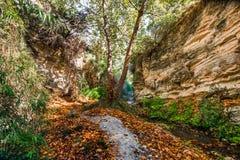 hösten räknade fallna skogjordningsligganden låter vara yellow Royaltyfria Bilder