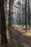 hösten räknade fallna skogjordningsligganden låter vara yellow Royaltyfri Foto