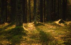 hösten räknade fallna skogjordningsligganden låter vara yellow Arkivfoton