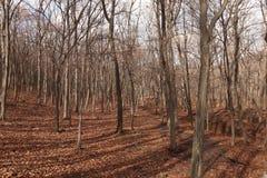 hösten räknade fallna skogjordningsligganden låter vara yellow Oktober natur royaltyfri fotografi