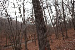 hösten räknade fallna skogjordningsligganden låter vara yellow Oktober natur Strömma i skogen arkivbilder