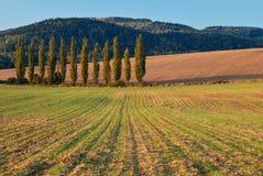 Hösten sätter in Fotografering för Bildbyråer