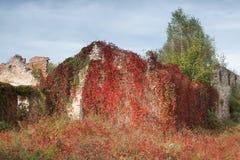 Hösten som murgröna-är klädd fördärvar av huset arkivfoton