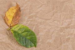 hösten torkade leaves Fotografering för Bildbyråer