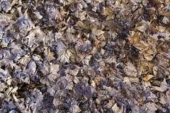 hösten torkade leaves Royaltyfria Foton