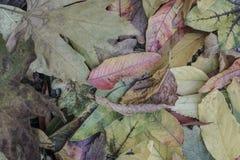 hösten torkade leaves Arkivfoto