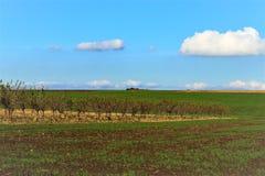 Höstfält- och druvaträd, härlig himmel arkivbilder