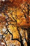 höstfärg Fotografering för Bildbyråer