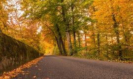 Höstfärg i skogen Schweiz Fotografering för Bildbyråer