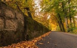 Höstfärg i skogen Suisse Arkivfoto