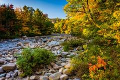 Höstfärg längs den snabba floden, i vit bergmedborgare F Arkivfoto
