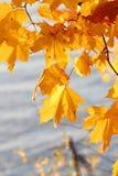 9 höstfärger Royaltyfri Bild
