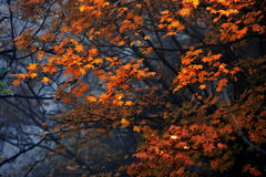 9 höstfärger Arkivfoton