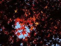 9 höstfärger Royaltyfri Fotografi