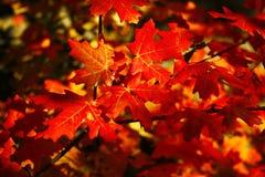 9 höstfärger Royaltyfria Bilder