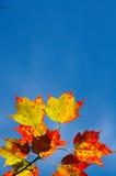9 höstfärger Royaltyfri Foto