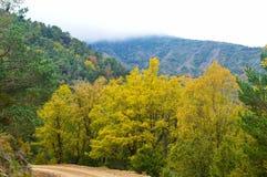 Höstfärger i bergen av Luesia Spain-1 royaltyfri bild