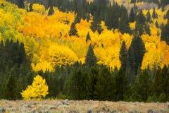 Höstfärger i Colorado Arkivfoto