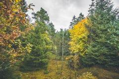 Höstfärger i en skog med sörjer träd Fotografering för Bildbyråer