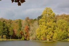 Höstfärger i skogsmark Arkivfoto