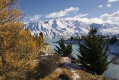 Höstfärger och ny snö på sjön Pukaki, Nya Zeeland royaltyfri foto