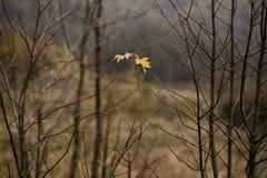 höstförälskelse i skog Fotografering för Bildbyråer