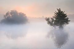 HöstFallliggande över den dimmiga dimmiga laken Royaltyfri Bild