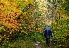 Höstfe med pensionären som går i skog Royaltyfri Foto