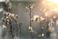 Höstfilialer och gräs på solnedgången Royaltyfri Foto