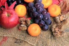 Höstfrukt, höst av bilden Royaltyfri Bild