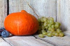 Höstfruktbakgrund Autumn Thanksgiving säsongsbetonad frukt mot bakgrund field blåa oklarheter för grön vitt wispy natursky för gr Royaltyfri Bild
