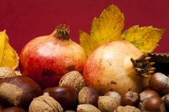 Höstfrukter Arkivbilder
