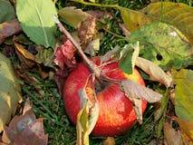 Höstfrukter, sydliga Bohemia Arkivbilder