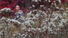 Höstglänta av blommor stock video