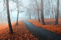 Höstgränd i dimman Det dimmiga höstlandskapet av den dimmiga hösten parkerar med stupade höstsidor i kalla signaler Arkivfoto