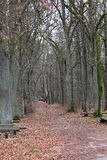 Höstgränd i skogen Fotografering för Bildbyråer