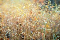 Höstgräs exponerat av solen fotografering för bildbyråer