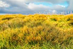 höstgräs i bergen Royaltyfri Foto
