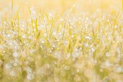 Höstgräs i solnedgångsolljus Suddig bakgrund för grön gul apelsinabstrakt begreppnatur Makro bokeh royaltyfri foto