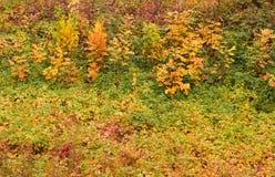 Höstgräs och sidor efter regn som bakgrund Arkivfoto