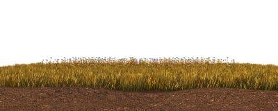 Höstgräs som isoleras på den vita illustrationen för bakgrund 3D royaltyfri fotografi