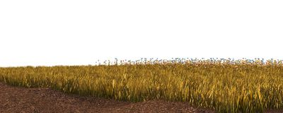 Höstgräs som isoleras på den vita illustrationen för bakgrund 3D royaltyfria bilder