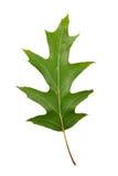 Höstgräsplan lämnar eken isolerad Arkivbild