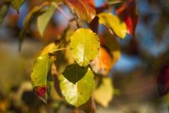 Höstgräsplansidor på träd Royaltyfri Bild