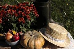 Höstgrönsaker i trädgården arkivbild