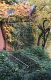 höstgruppen colours tysk yellow för rhine flodtree Arkivbilder