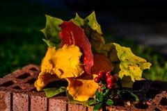 höstgruppen colours tysk yellow för rhine flodtree Royaltyfri Fotografi