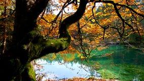 höstgruppen colours tysk yellow för rhine flodtree arkivfoto
