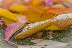 höstgruppen colours tysk yellow för rhine flodtree Royaltyfria Bilder